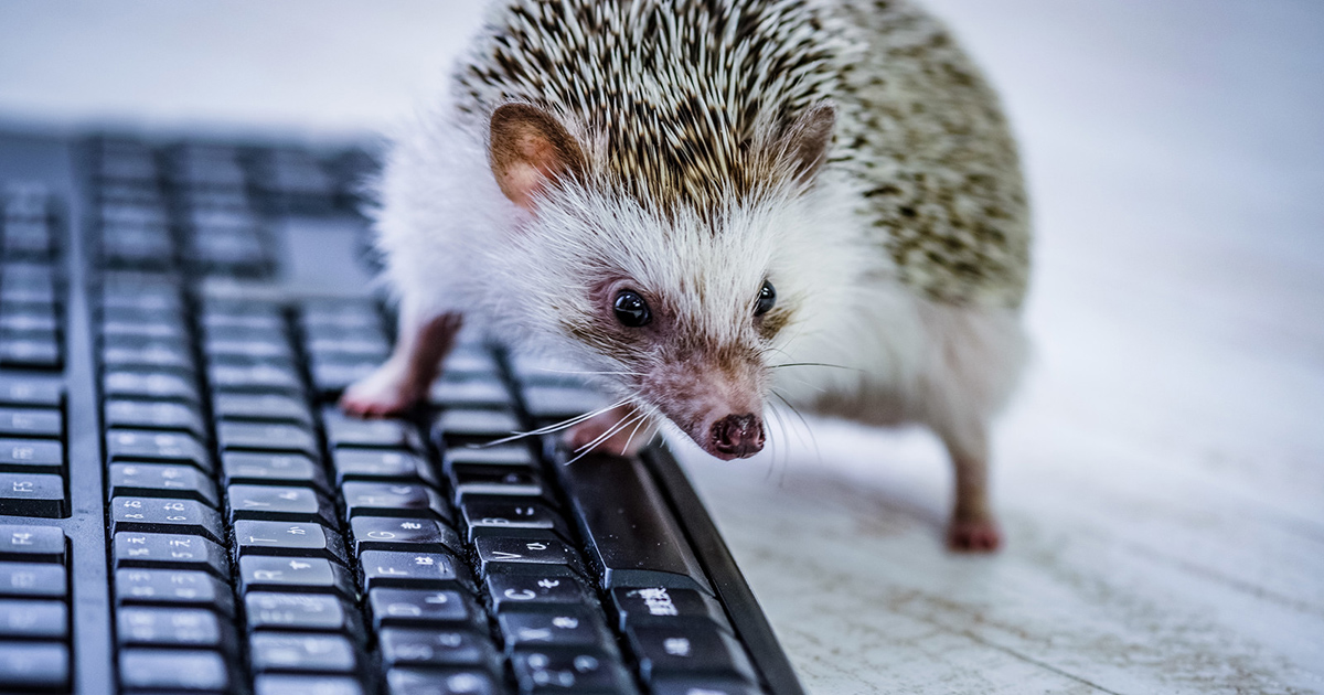 "HTML5のaタグのrel=""noopener noreferrer""や、ページ内リンク、JavaScript実行を解説"